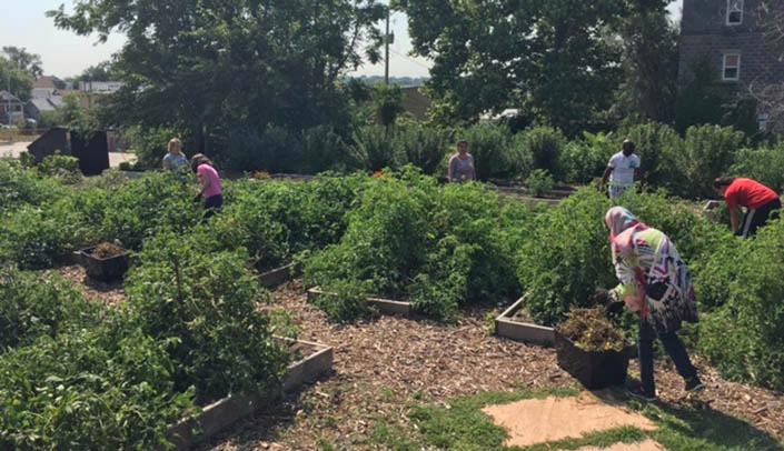 Image with caption: Public health volunteers harvested, weeded and cleaned up the Together Omaha community garden during Volunteer Day.