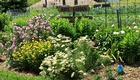 Garden Walk marks 50th year in June